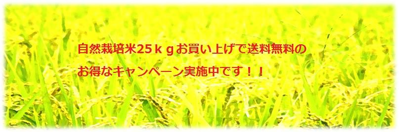 お米キャンペーン
