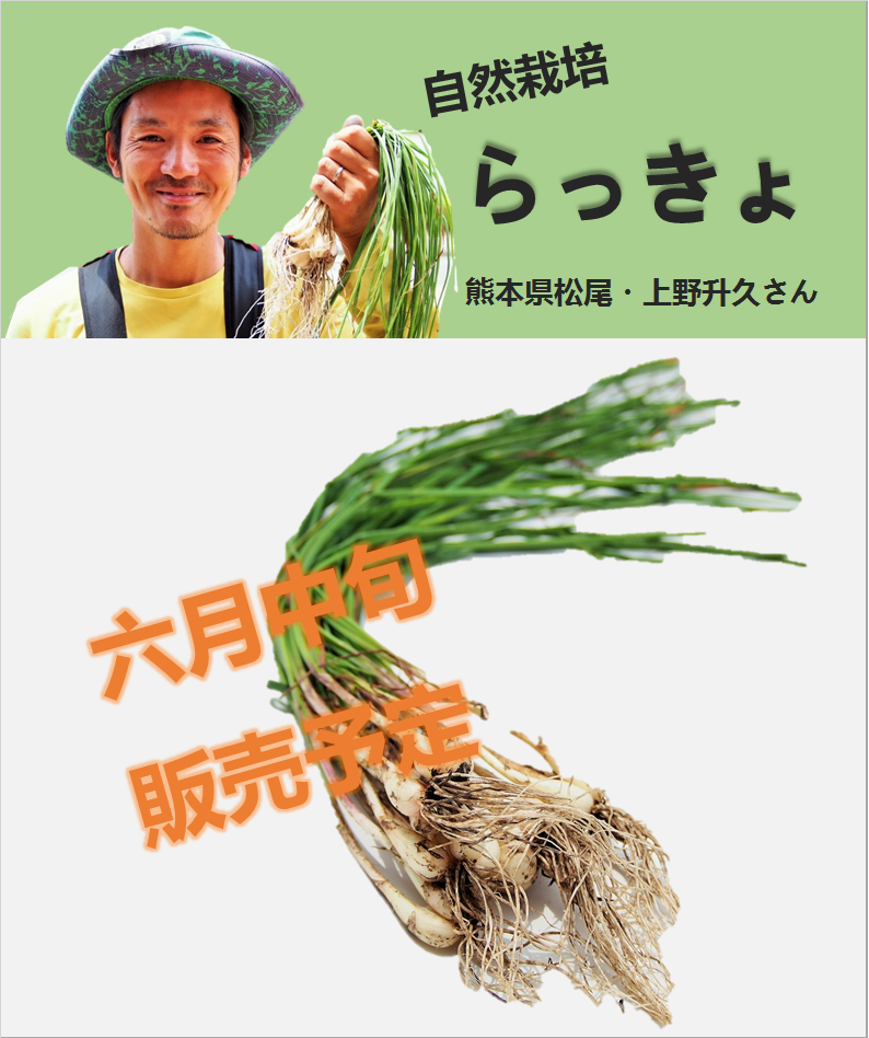 らっきょ-広告