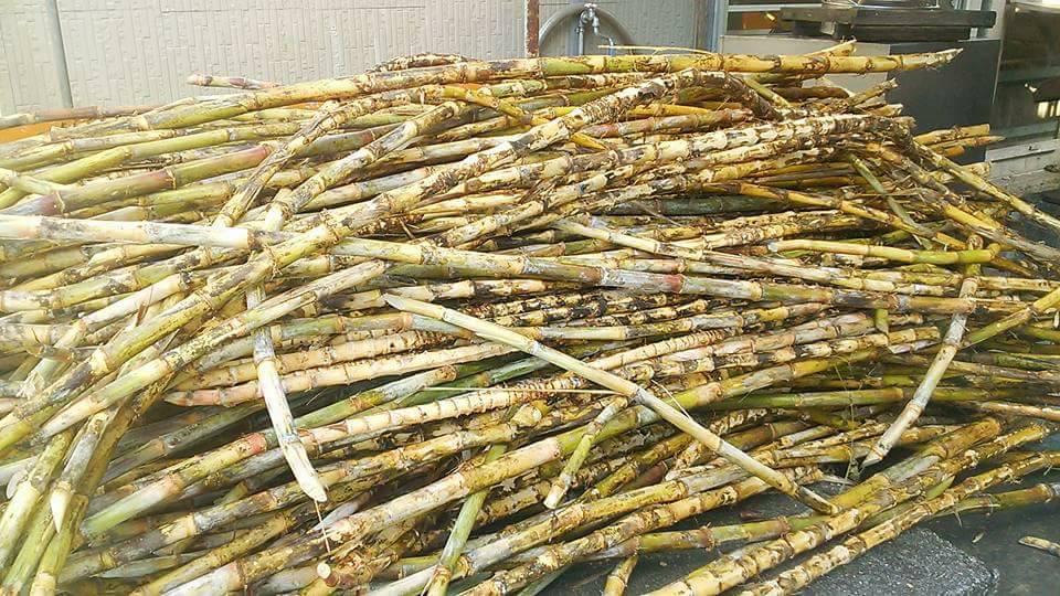 叶さんの自然栽培黒糖