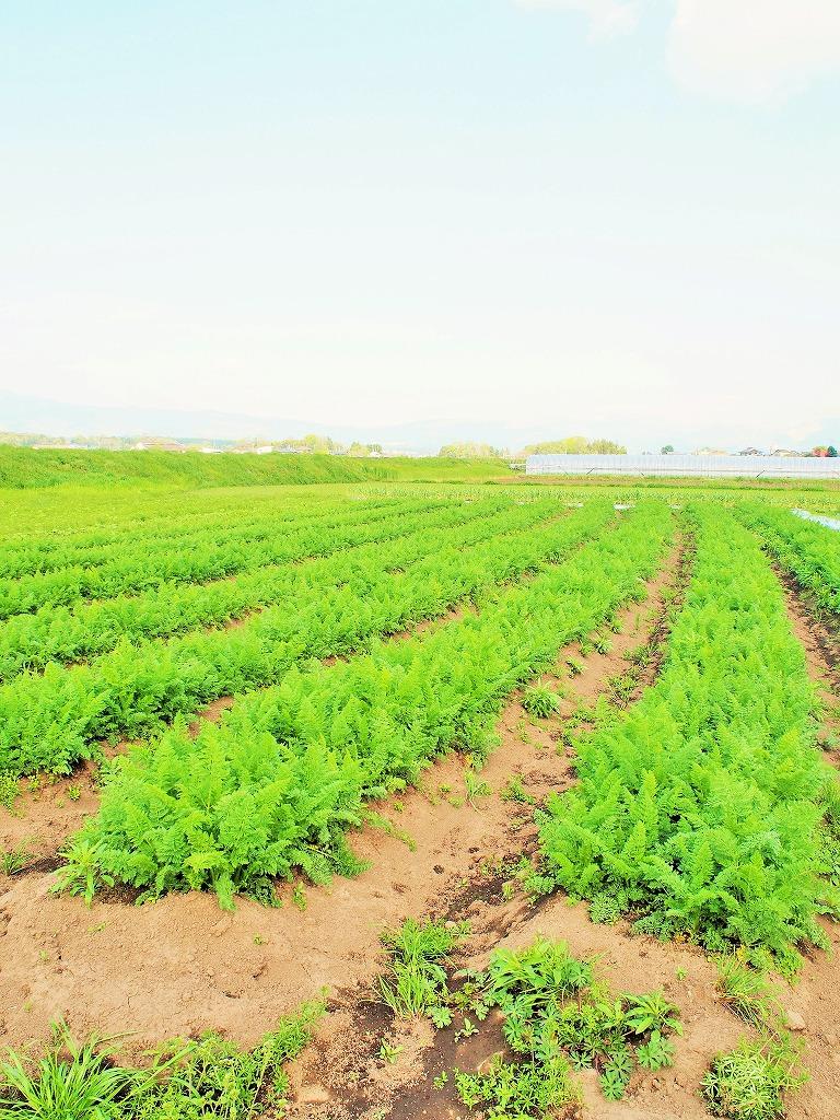 上野さん自然栽培乾燥にんじん