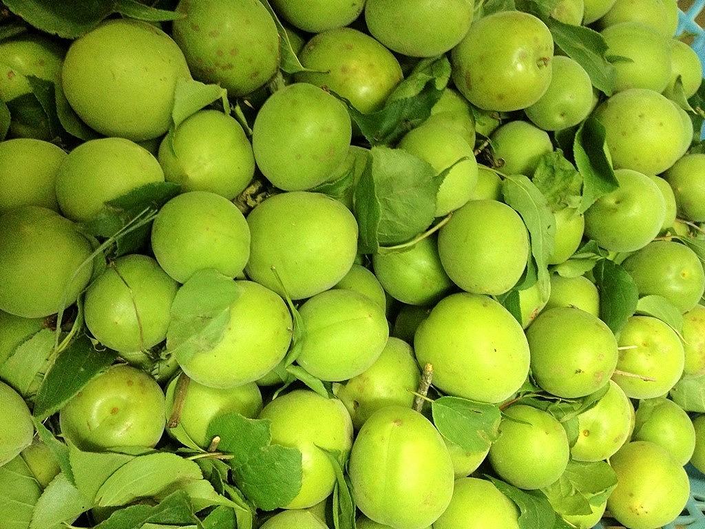河地さんの自然栽培梅
