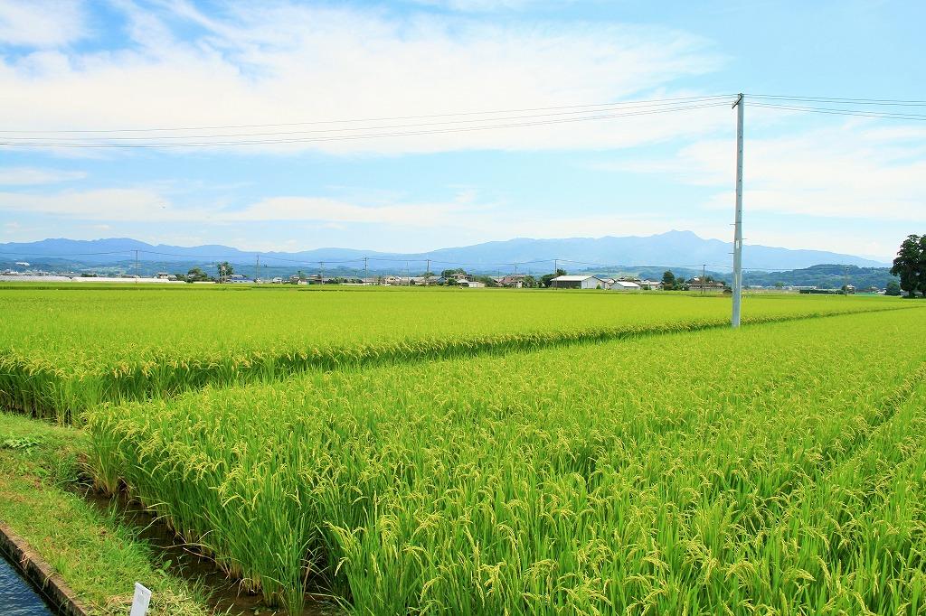 九州熊本県冨田さん無肥料・無農薬・自然栽培米