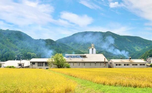 九州産自然栽培麦茶・無肥料無農薬オーガニック麦茶