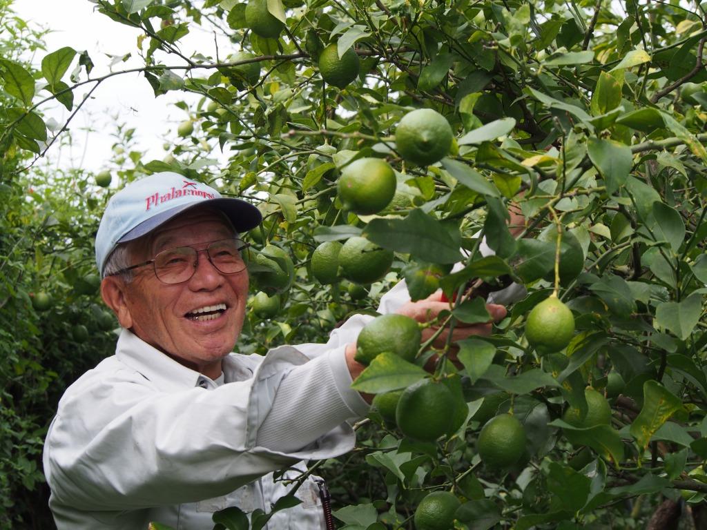 九州熊本県吉田さんの無肥料・無農薬・自然栽培レモン・国産オーガニックレモン