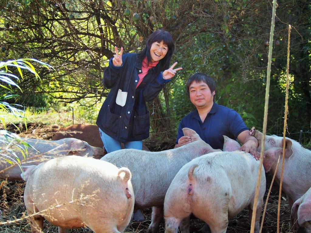 熊本県菊池市やまあい村武藤さん自然放牧走る豚・やまあい村育ち自然豚
