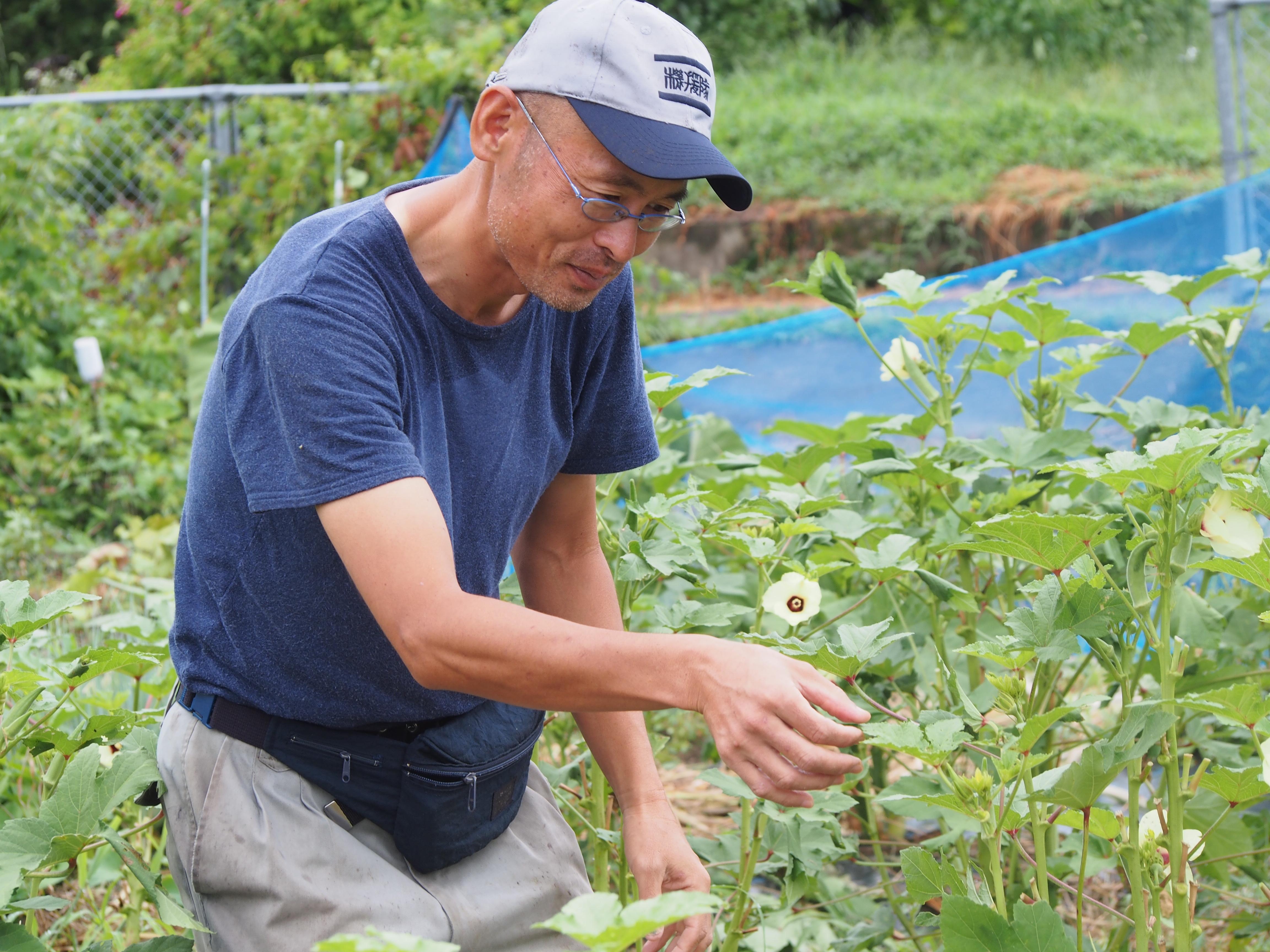 岡部さんの自然栽培オクラ