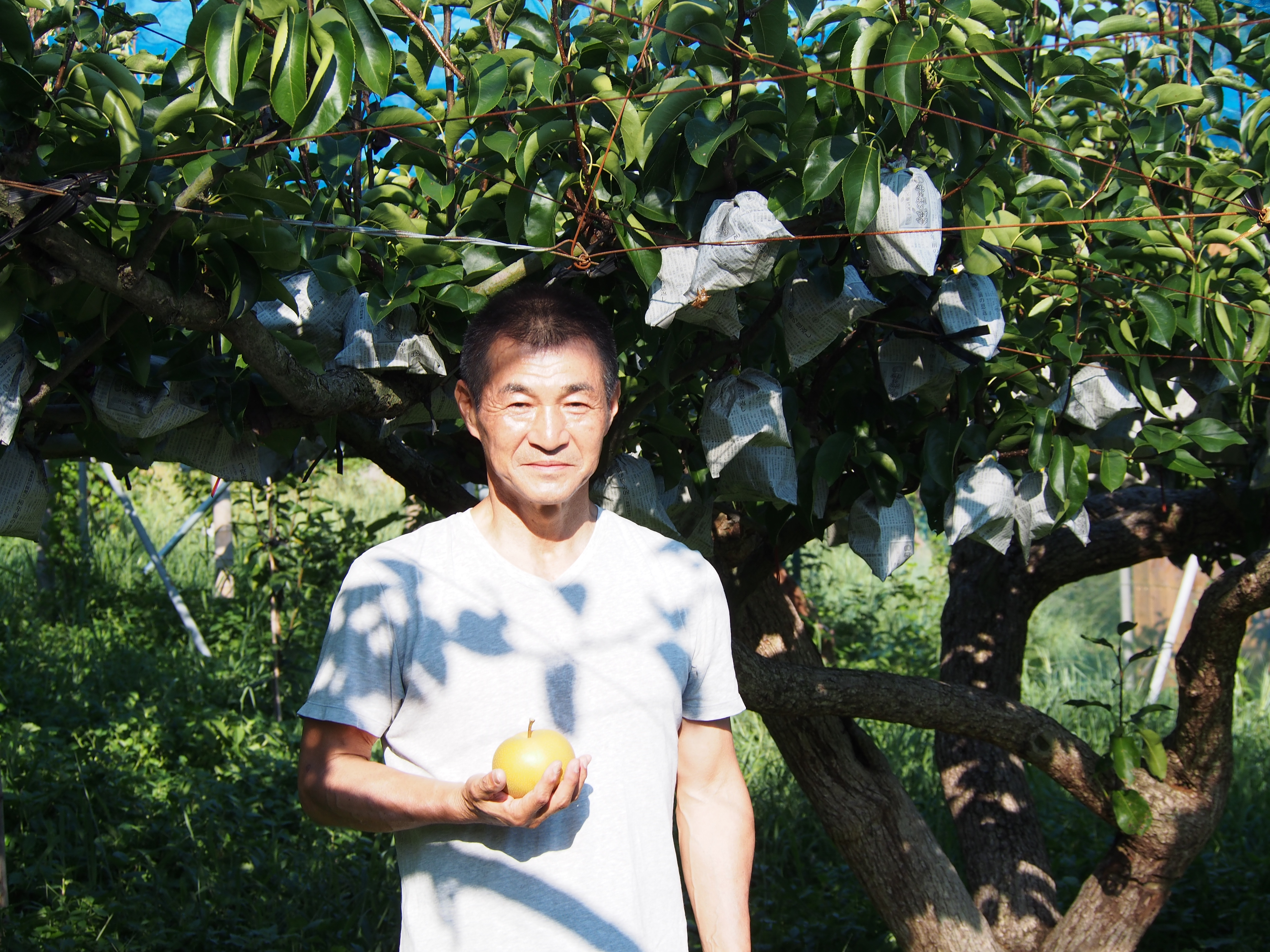 九州熊本県荒尾市高塚さんの無肥料・減農薬 梨(豊水)・有機栽培梨