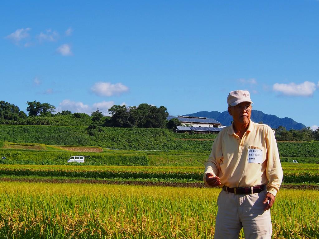 熊本県菊池市 上野松年さん 自然栽培米ヒノヒカリ