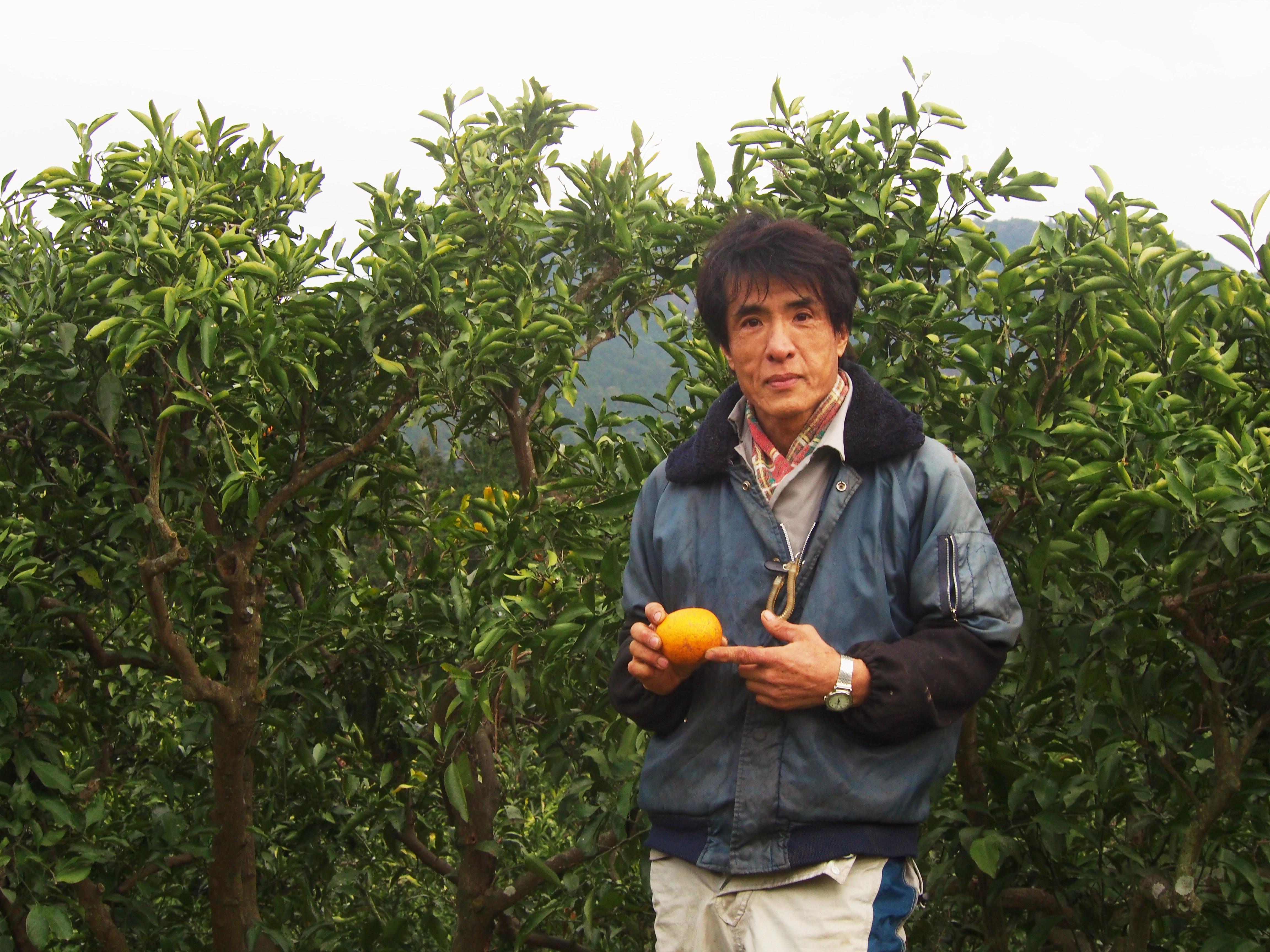 九州熊本県水俣市 福島雄治さんの無肥料・無農薬 河内晩柑