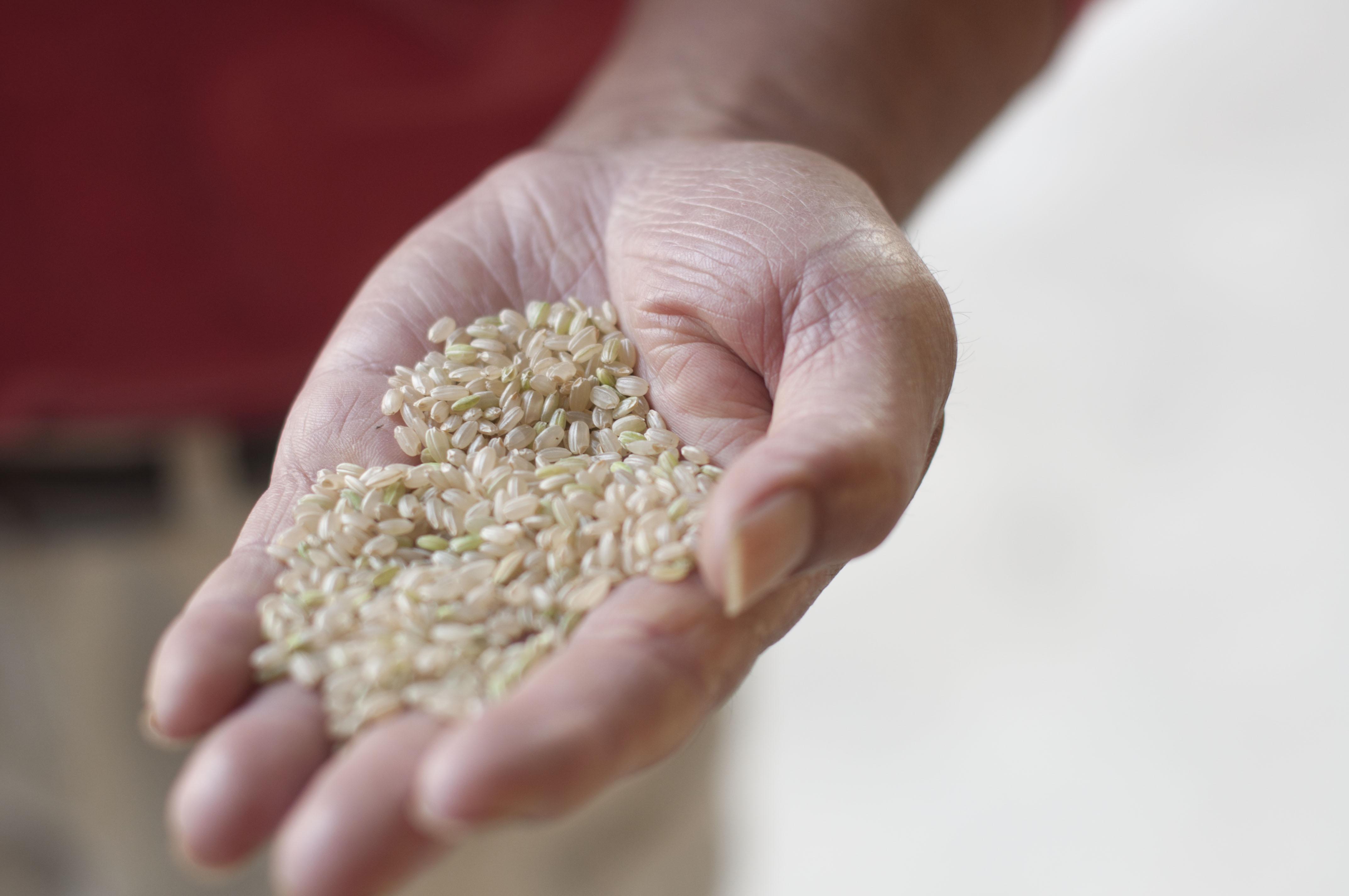 収穫後、乾燥、もみすりを終えたお米