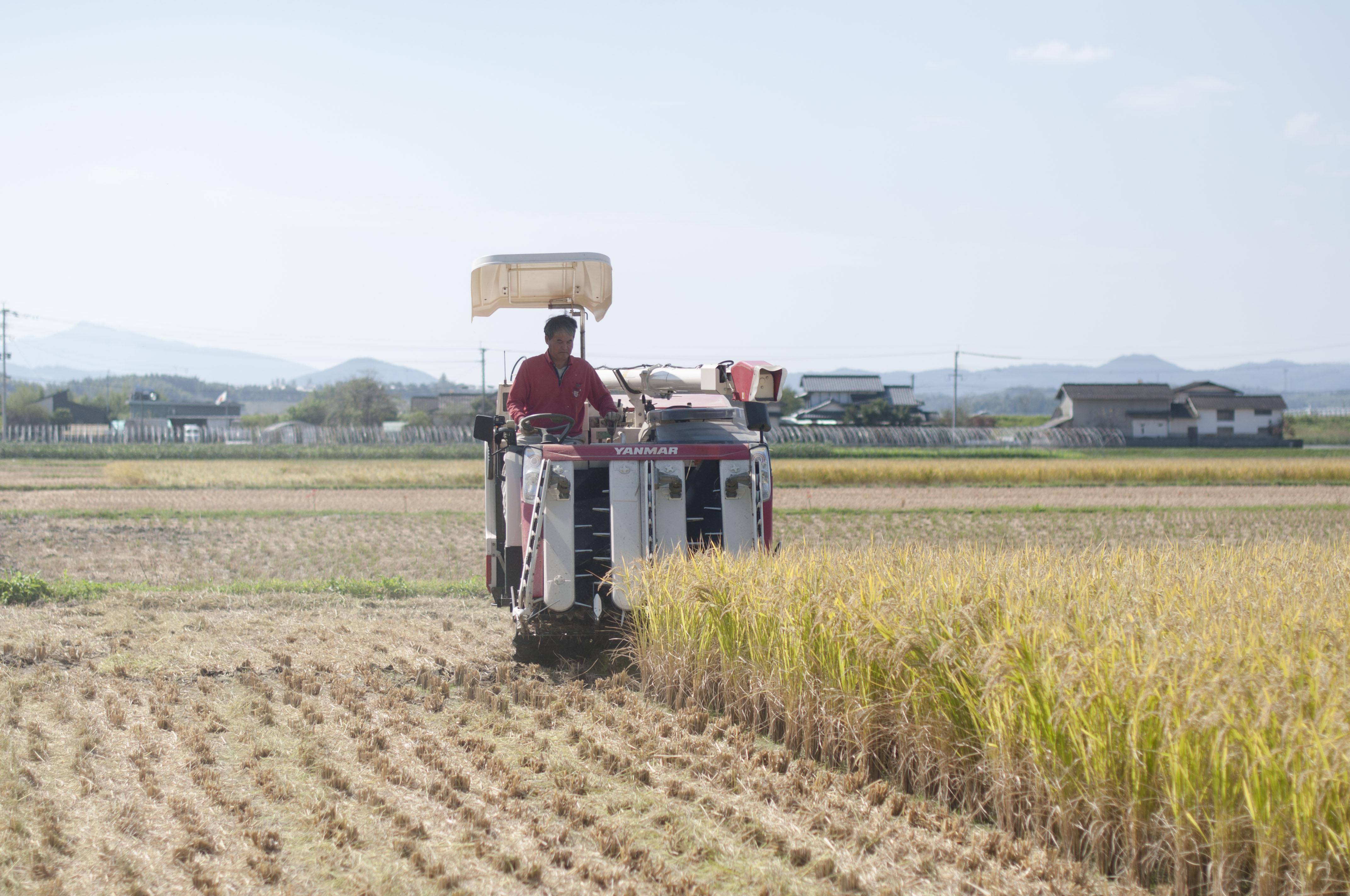 収穫する冨田親由さん